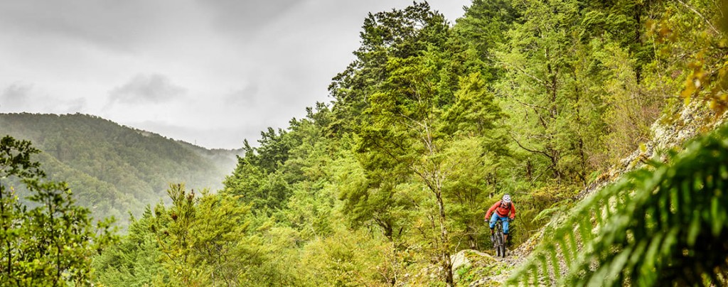 Mountain biker in rainforests on our mountain bike tour South Island New Zealand