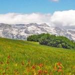 Descending through alpine meadows in Slovenia
