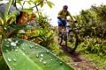 Mountain biking in cloud forests of Ecuador