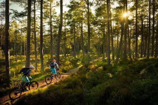 Sunshine and singletrack in Scotland on our mountain bike tour Cairngorms