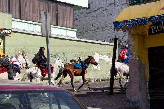 Horses in the streets on our mountain bike tour ecuador