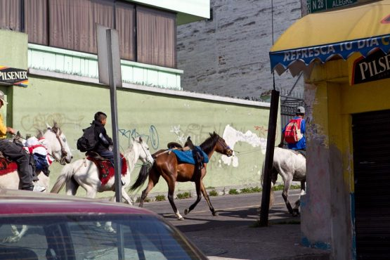 Horses in the streets on our mountain bike tour ecuador