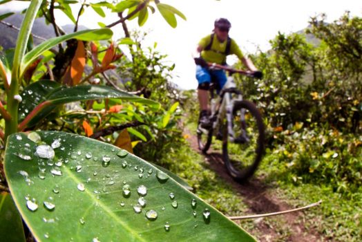 Mountain biking in cloud forests on our mountain bike tour Ecuador