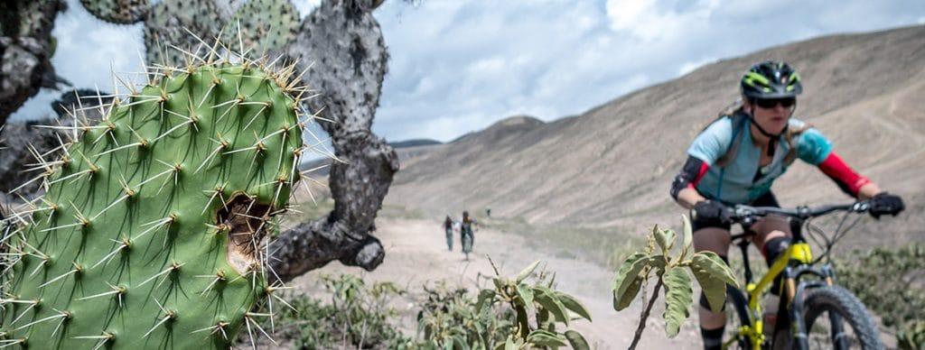 Fast singletrack riding on our mountain biking tour Ecuador south America