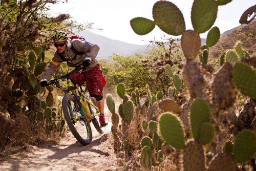 Mountain biking and cacti on our mountain bike tour Ecuador