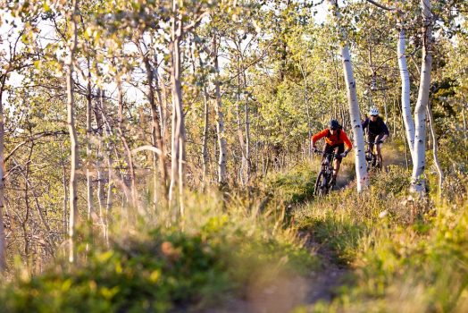 Singletrack through the aspens on our mountain bike tour Yukon