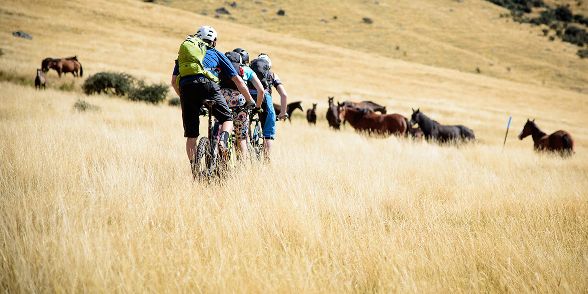 Riders approach wild horses on H+I Adventures New Zealand mountain bike tour