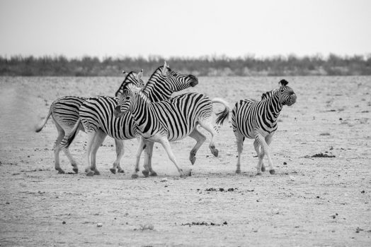 Zebra spotting mountain bike safari tour Namibia