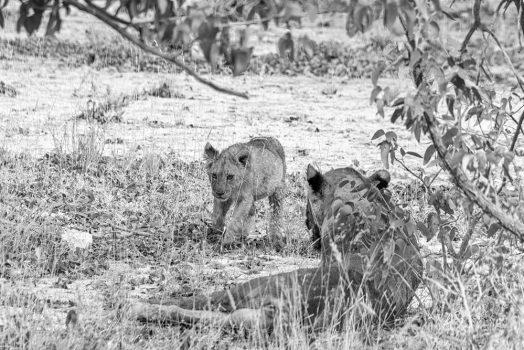 Close wildlife action on mountain bike safari tour Namibia