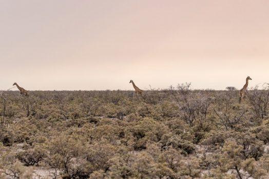 Local wildlife on mountain bike safari tour Namibia