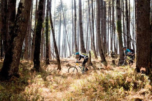 Mountain bike tour Nepal - forest riding