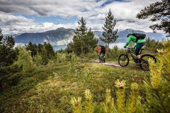 Mountain bike tour Norway - forest time