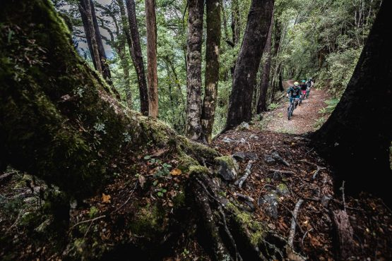 In the temperate rain forest of the Old Ghost Road in our Mountain bike tour New Zealand.