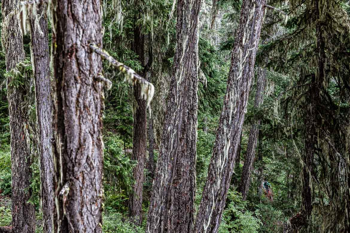 British Columbia in photos shows how dense the forests are on our BC MTB vacation