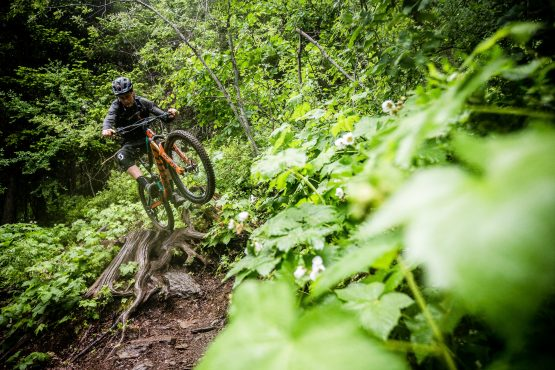 Singletrack goes straight over the tree stump in BC, Canada