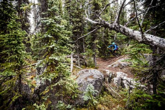 Perfect guided trails on our Yukon MTB vacation