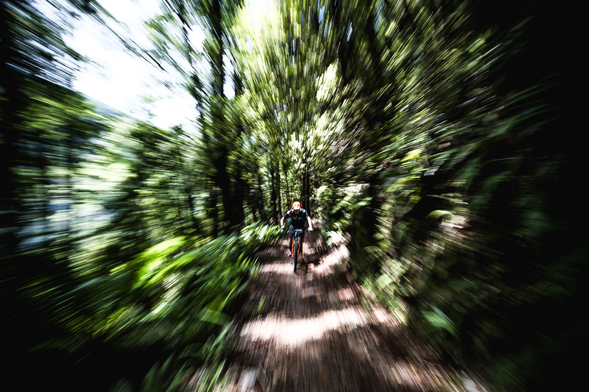 Mountain biker rushing through the canopy floor on the Old Ghost Road during a mountain bike tour of New Zealand.