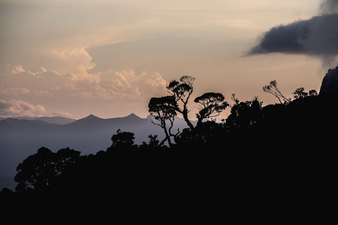 The impressive dusk skyline above the temperate rain forest of the Old Ghost Road on our mountain bike tour New Zealand.
