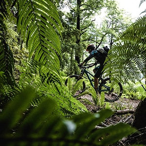 Riding the Old Ghost Road as part of a mountain bike tour New Zealand.