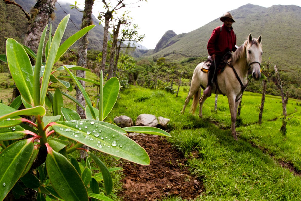 A local man on horseback in a plantation in Ecuador as seen on our mountain bike adventures South America