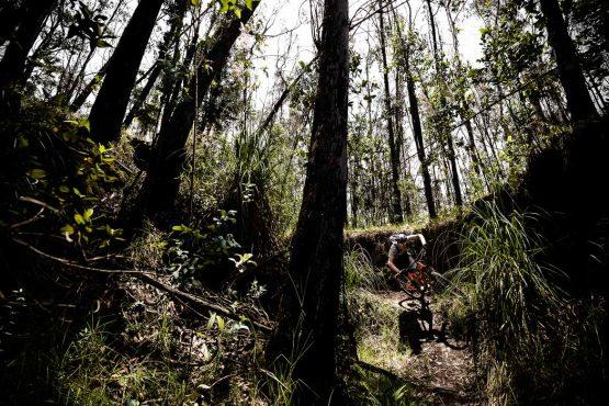 Forest riding on our MTB tour Ecuador