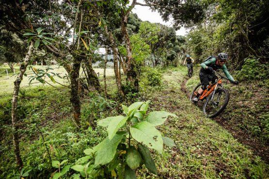 Pristine jungle singletrack on our MTB tour Ecuador