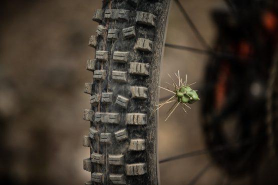 Cactus on the trail on our mountain bike tour Ecuador