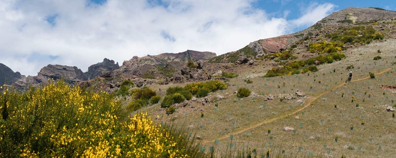 EWS Travel Madeira