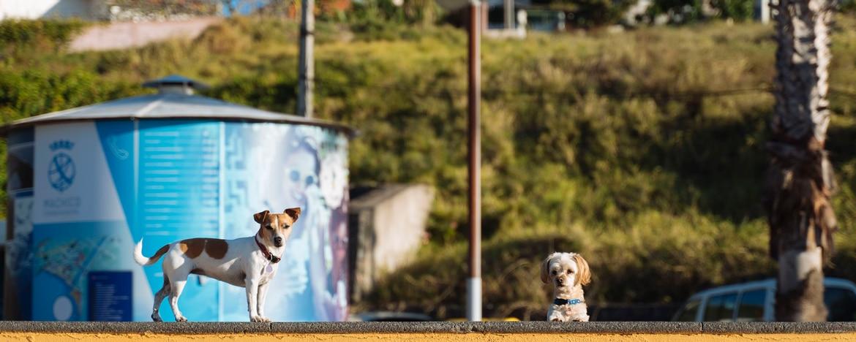EWS Travel Madeira - doggy enduro spectators