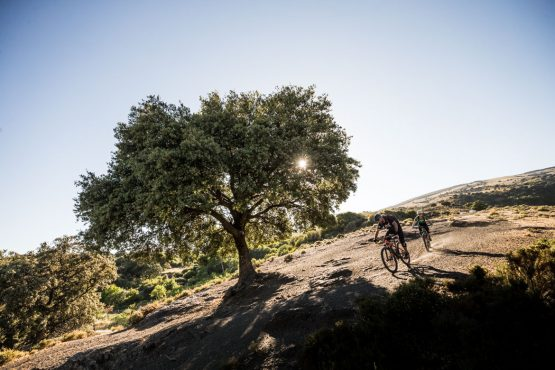 Heading for the shade of the trees - Mountain bike tour Spain
