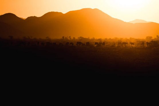 Watching a herd of oryx grazing at sunset on a mountain bike safari tour Namibia
