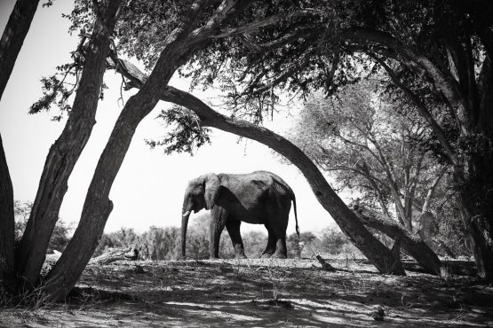An elephant perfectly framed by trees on a mountain bike safari tour Namibia