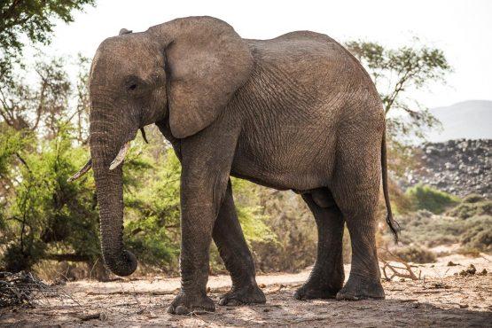 Spotting elephants on a mountain bike safari tour Namibia