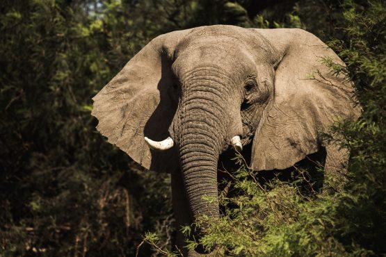 A close up elephant encounter on a mountain bike safari tour Namibia