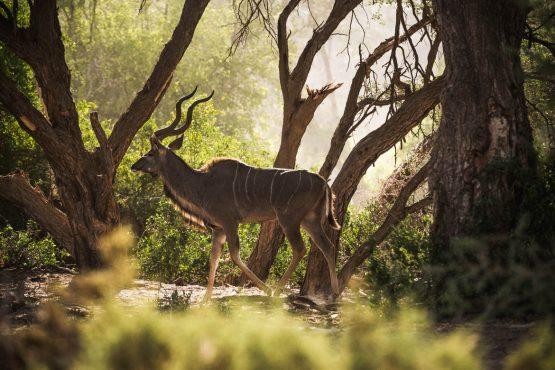 Spotting kudu on a mountain bike safari tour Namibia