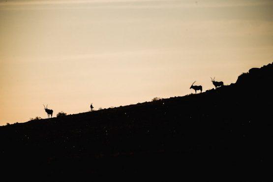 Oryx standing atop a ridge line during a mountain bike safari tour Namibia